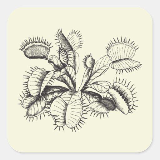 Plantas carnivoras para dibujar imagui for Plantas para dibujar