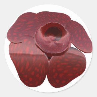 Pegatinas de Rafflesia Pegatina Redonda