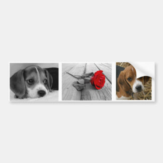 Pegatinas del beagle pegatina para coche
