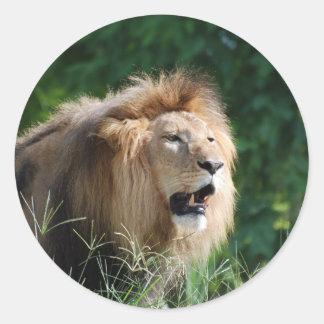 Pegatinas del león que gruñen