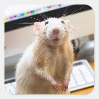 Pegatinas del ratón de Marty - Standin alto Pegatina Cuadrada
