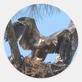 Pegatinas jovenes feroces de Eagle Pegatina Redonda