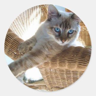 pegatinas lindos del gato siamés pegatina redonda