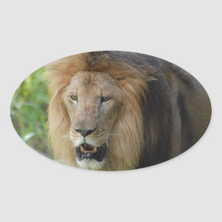 Pegatinas orgullosos del león calcomania de oval
