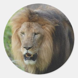 Pegatinas orgullosos del león pegatinas redondas
