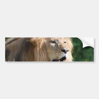 Pegatinas para el parachoques del león que gruñen etiqueta de parachoque