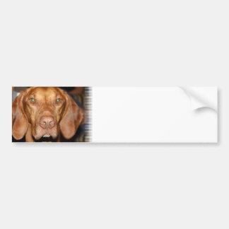 Pegatinas para el parachoques del perro del Coon Pegatina De Parachoque