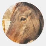 Pegatinas soñolientos del caballo de proyecto