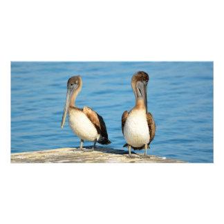 Pelícanos de Brown en un muelle Tarjetas Fotográficas