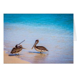 Pelícanos de la playa de Bachas Tarjeta