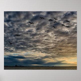 Pelícanos en un cielo tempestuoso póster
