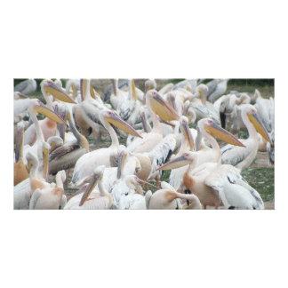 Pelícanos Tarjetas Fotograficas