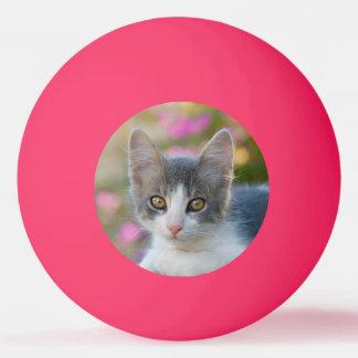 Pelota De Ping Pong Amantes mullidos del gato de la foto del pequeño
