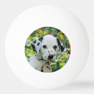 Pelota De Ping Pong El negro lindo manchó la foto dálmata del perrito