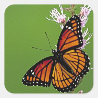 Pendiente de la mariposa de monarca pegatina cuadrada