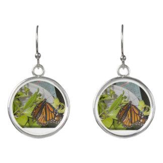 Pendientes de la mariposa de monarca