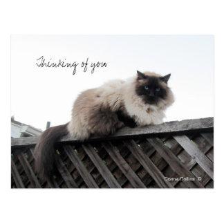 Pensamiento en usted gato en una cerca postal