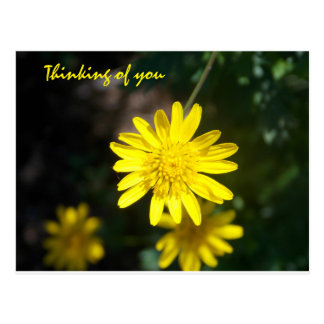 Pensamiento en usted - margarita amarilla postal