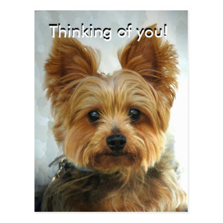 ¡Pensamiento en usted! , Postal