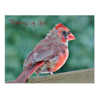 Pensamiento en usted postal cardinal