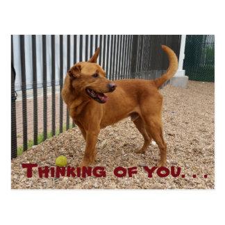 Pensamiento en usted postal del perro