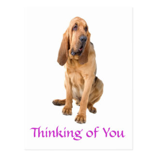 Pensamiento en usted postal del saludo del perro