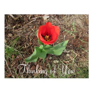 Pensamiento en usted postal roja bonita de la flor