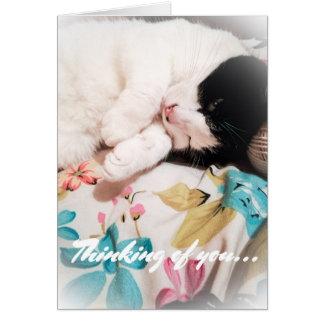 Pensamiento en usted tarjeta de la foto del gato