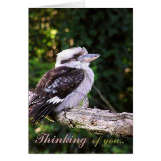 Pensamientos de Kookaburra. Tarjeta