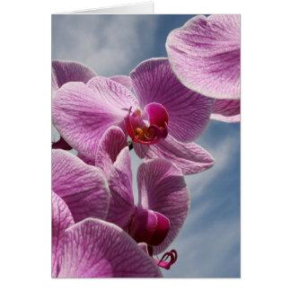 Pensando en usted tarjeta de felicitación, orquíde