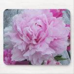 Peonies/estera rosados del ratón de la flor del Pe Tapete De Ratones