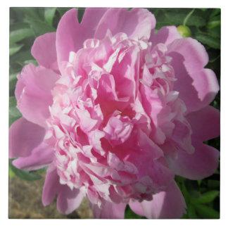 Peony Sun rosado Azulejo Cuadrado Grande