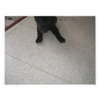 Pequeña cara negra del perrito y patas delanteras arte con fotos