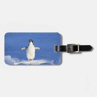 Pequeña etiqueta feliz del equipaje del pingüino