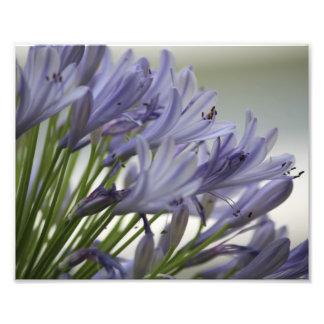 Pequeña floración foto