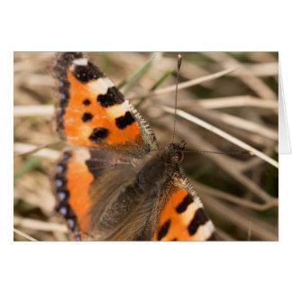 Pequeña mariposa de concha tarjeta de felicitación