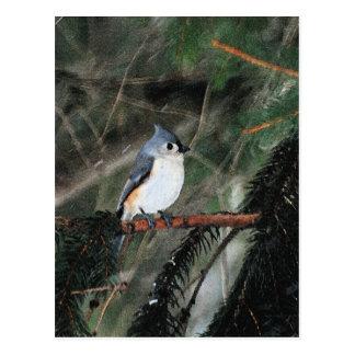 Pequeña postal azul del pájaro