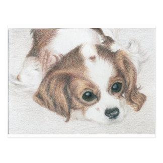 pequeña postal del perro del perro de aguas