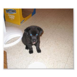 Pequeña sentada negra del perrito impresiones fotograficas