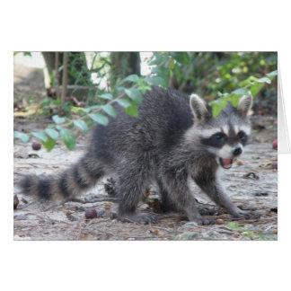 Pequeña tarjeta del mapache