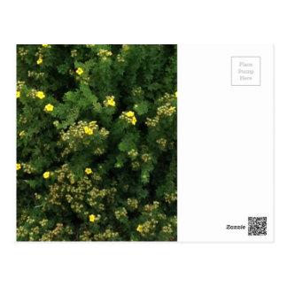 Pequeñas flores amarillas postal