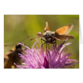 Pequeñas mariposas del capitán tarjeta de felicitación