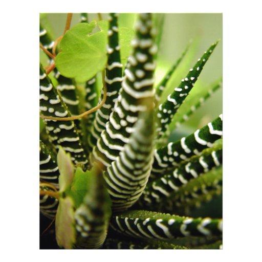 Preguntas yahoo respuestas - Como transplantar cactus ...