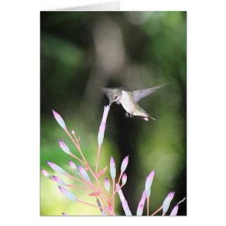 Pequeño colibrí bonito felicitaciones