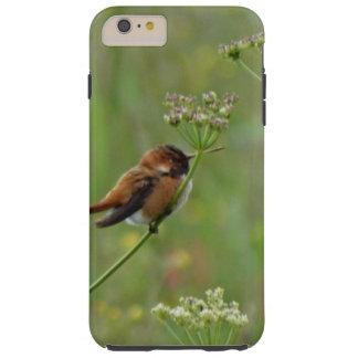 Pequeño colibrí lindo funda resistente iPhone 6 plus