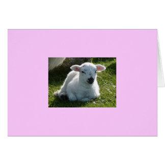 Pequeño cordero tarjeta de felicitación