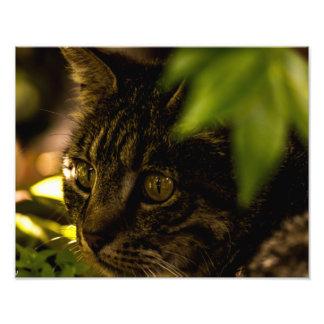 Pequeño del gato cierre para arriba arte fotográfico
