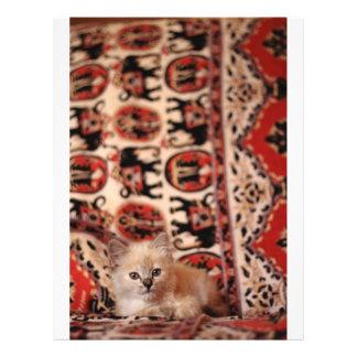 Pequeño gatito lindo tarjetón