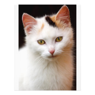 Pequeño gatito lindo tarjeton