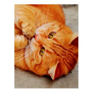 Pequeño gato mimoso - impresión linda del gatito postal